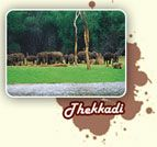 Thekkaddy- Periyar Wildlife Sanctuary